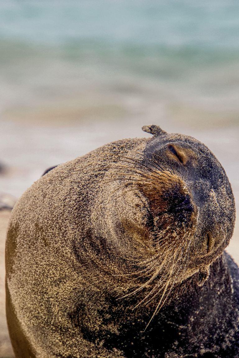 ontdek-je-bestemming-dierenfoto-zeehond