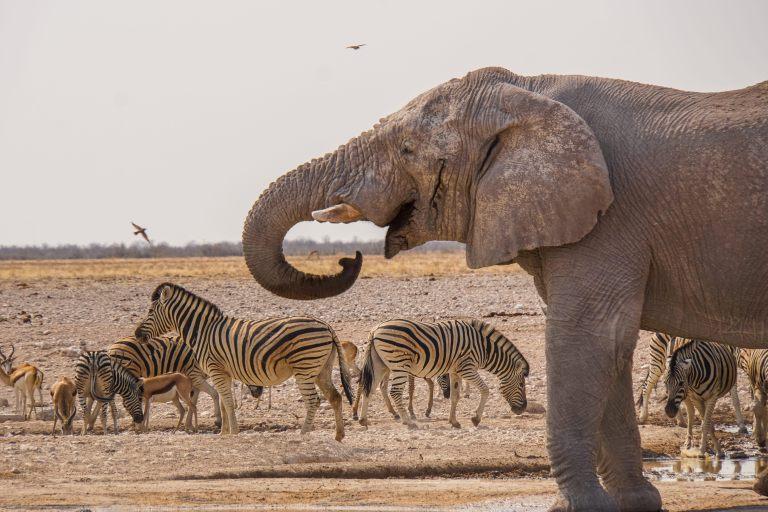 ontdek-je-bestemming-dierenfoto-olifant-zebra